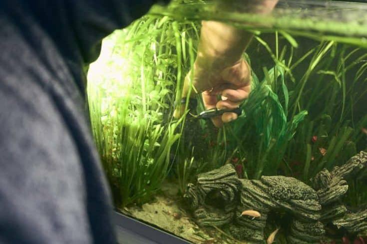 Detalle de la mano del hombre podando las plantas de su acuario con unas tijeras