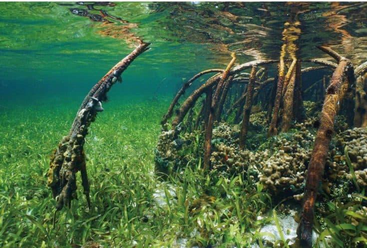 Fondo de acuario reversible de madera y zen submarino Top Fin®