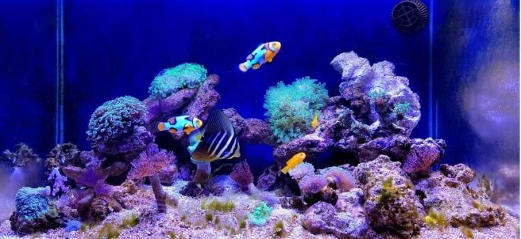 Los mejores tanques de nano arrecifes: guía y reseñas de productos: toma de enfoque de arrecifes y peces de acuarios.