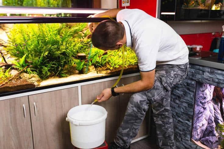 Hombre joven cambiando el agua en el acuario con sifón.
