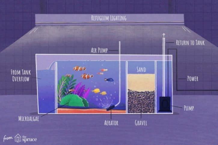 Se instaló un refugio de acuario de agua salada