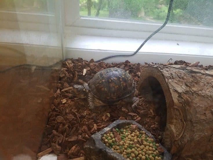 tortuga con caparazón en acuario o jaula con tronco y comida