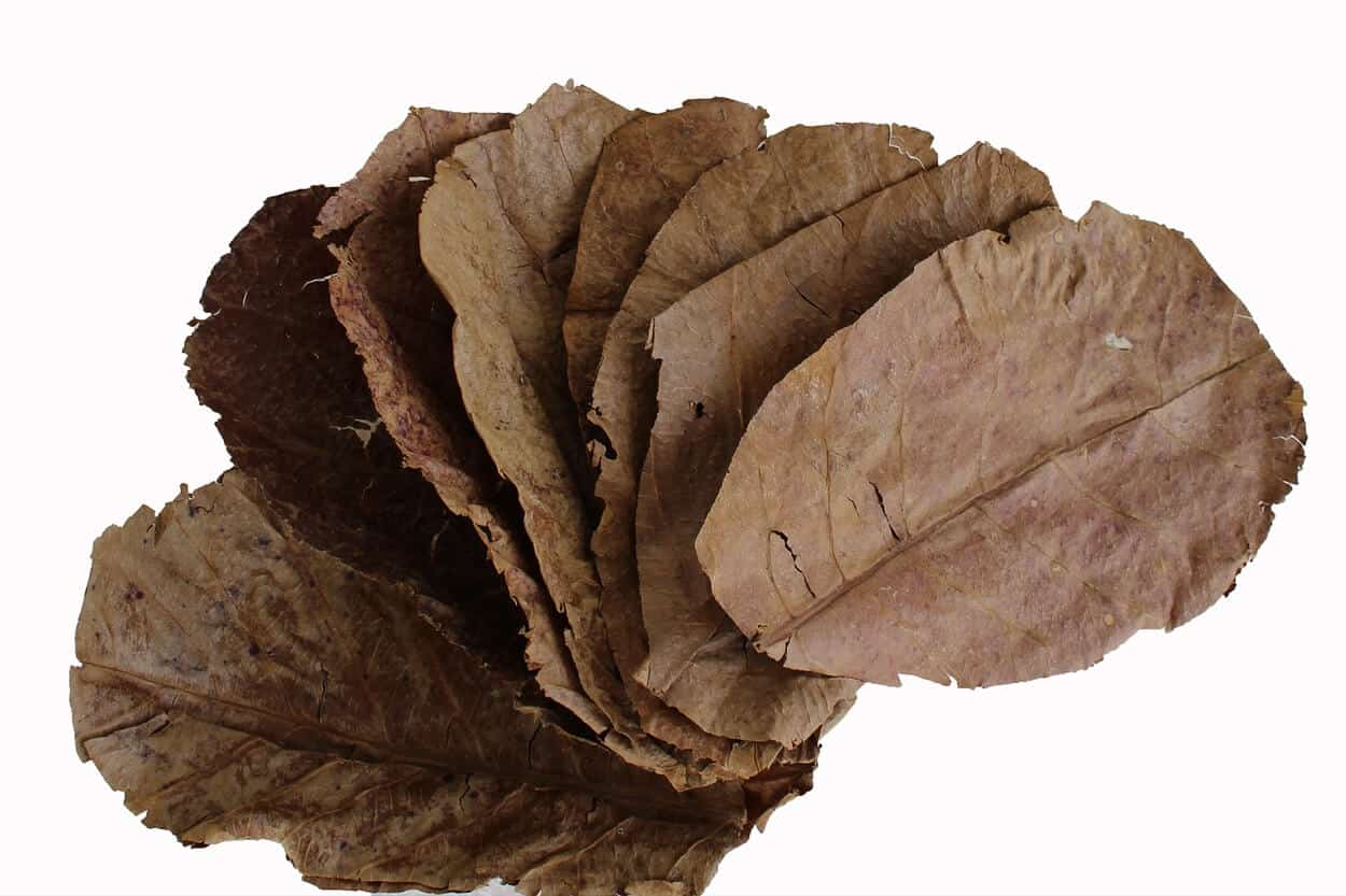 A handful of Indian almond leaves